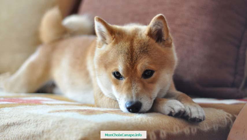 Nettoyer urine de chien et chat sur canapé en tissu