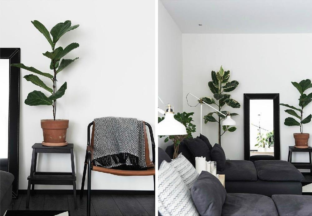 Décorer son salon avec des plantes vertes