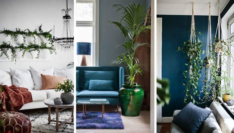 comment decorer sa maison avec des plantes vertes